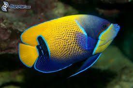 un lindo pez