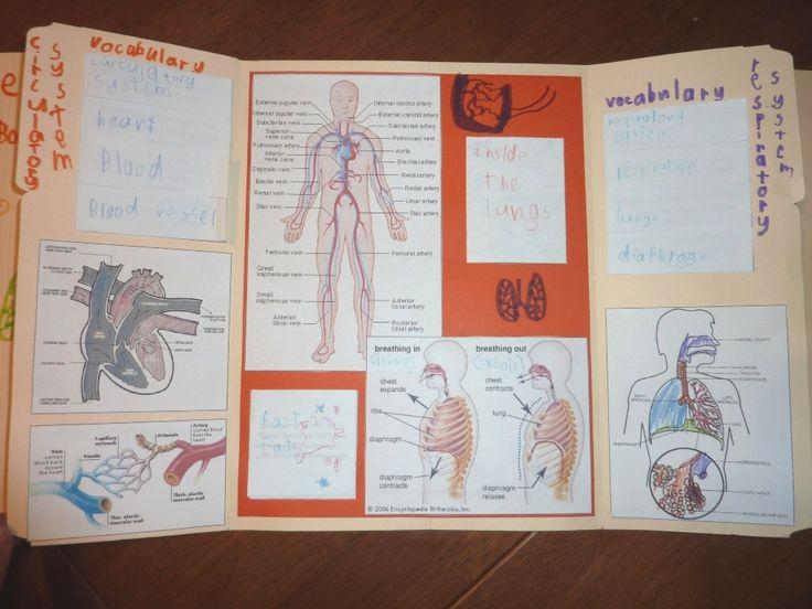 circulatory_respiratory