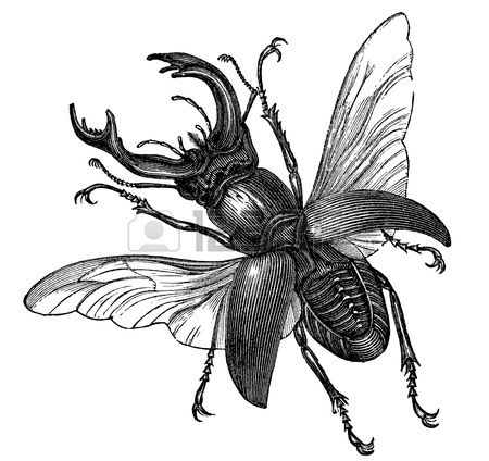 A vintage engraved illustration of a stag beetle