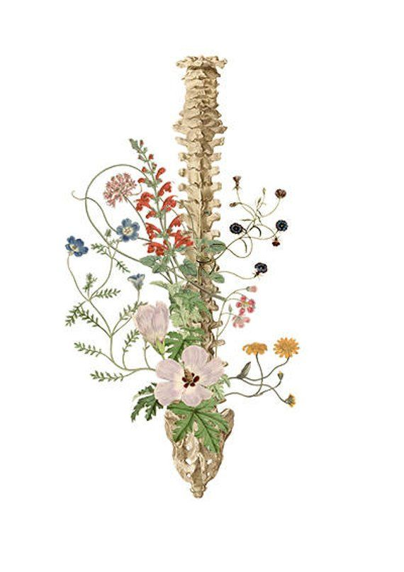 Soft Colors Wild Flowers Spine Anatomical Art Anatomy Art Etsy