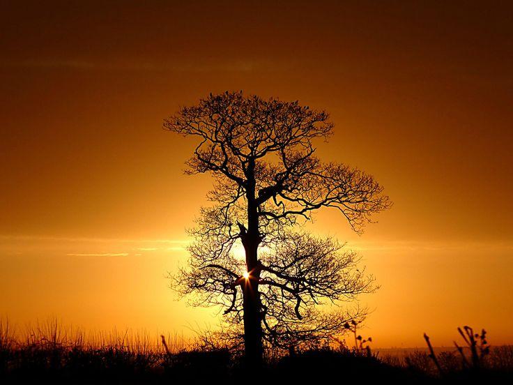 Photograph Sunrise by Steve Adams on 500px