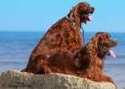 Simba & Samson at the beach
