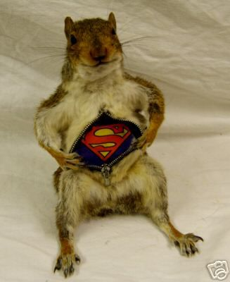 taxidermy squirrels - Google Search