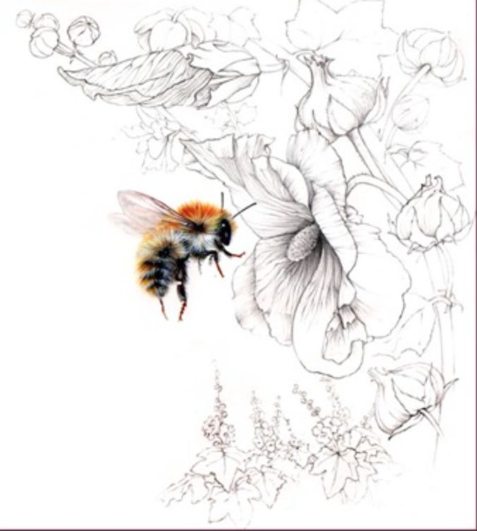 43 best 昆蟲 images on Pinterest | Bee art, Bees and Bumble bees