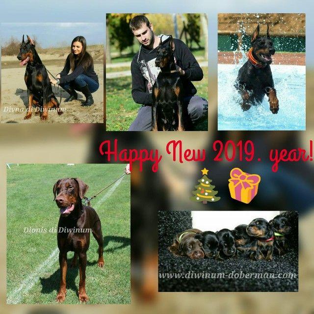 Dobermann Welpen Doberman Dogs Happy New