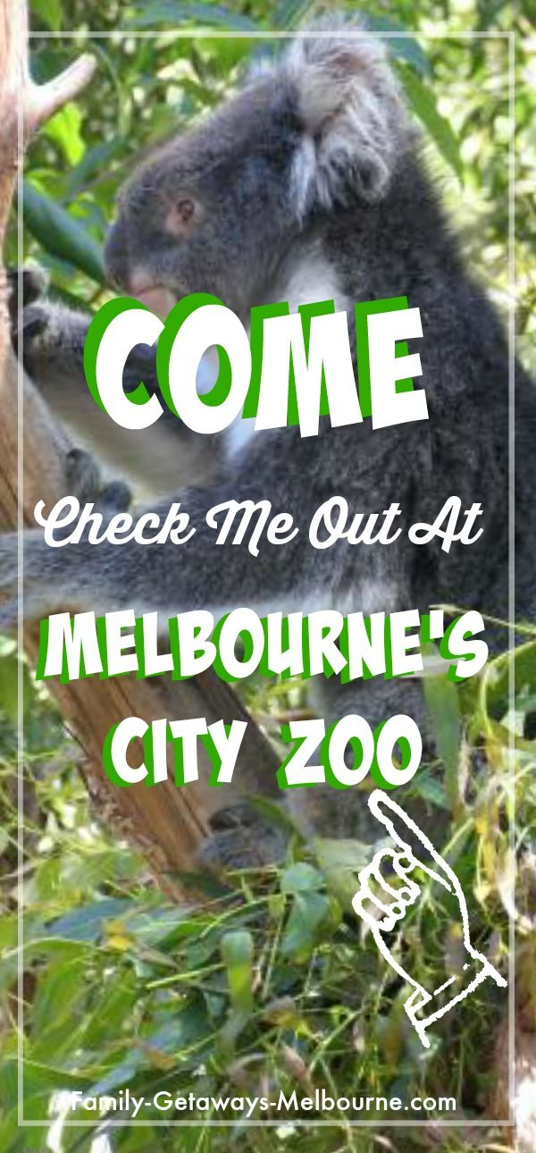 Check out all the unique Australian animals and other creatures from all over the world, at the Royal Melbourne Zoo on the outskirts of the city. Click the 'read it' button for more information.