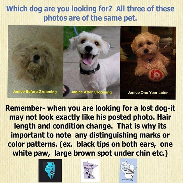 Remember Dog S Appearances Can Change Don T Discount Photos