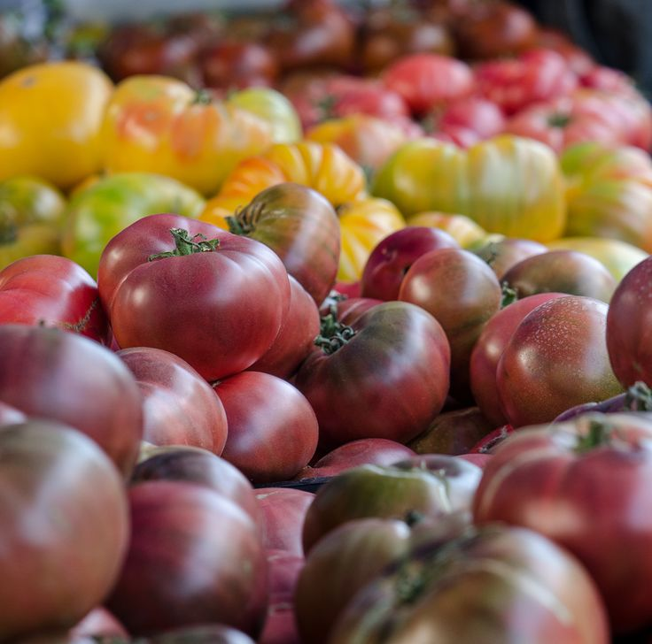 Heirloom Cherokee Tomatoes at Valdivia Farms - Santa Monica Farmers Market