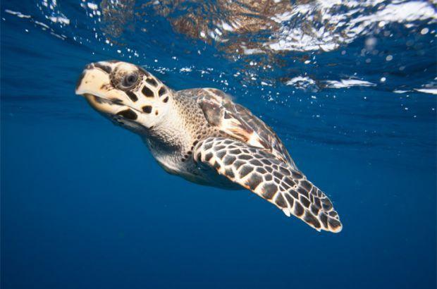 Encontro discute proteção das tartarugas marinhas no NE