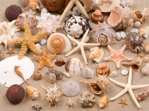 19 best images about seashell crafts on pinterest for Ideas for displaying seashells