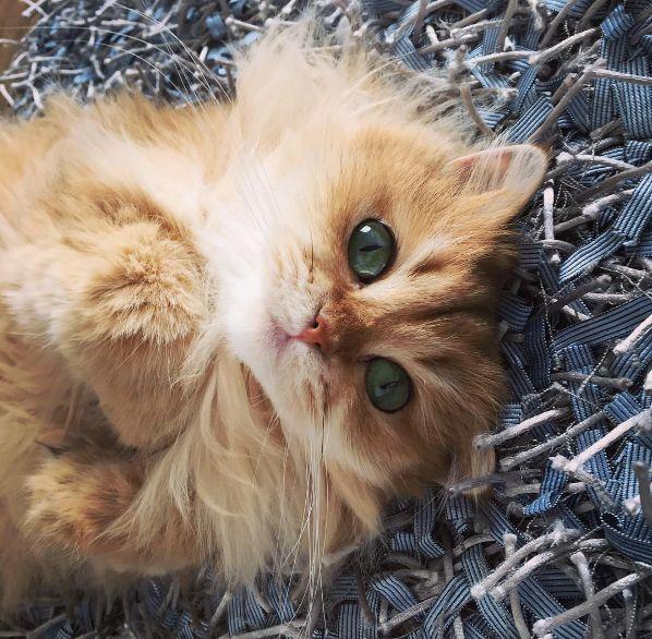Smoothie, il gatto più fotogenico di Instagram  -cosmopolitan.it