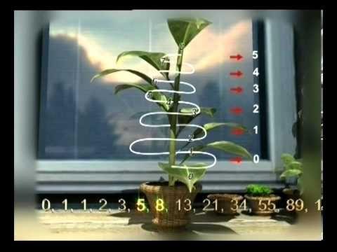 Золотое сечение и Фракталы Божественная мера красоты Наука о.. - YouTube