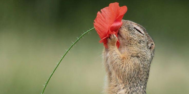 15 fotos incríveis de animais fofos premiados   – Lia