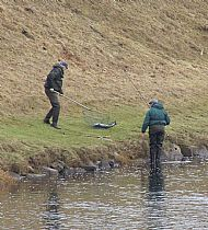 Salmon fishing on the Spey