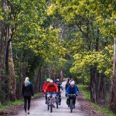 Warburton Rail Trail: Woori Yallock to Seville 7.2km in 22mins by bike