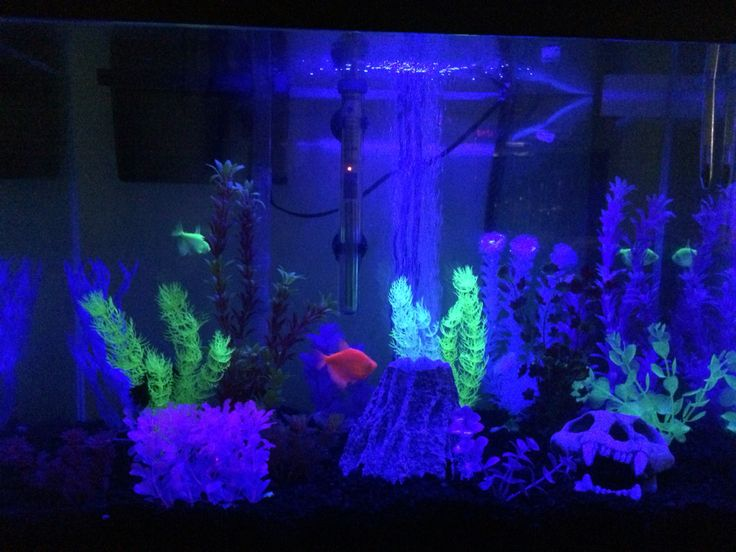 115 best images about aquarium inspiration on pinterest for Blue light for fish tank