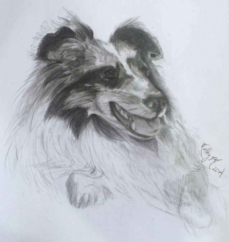Drawing shetland sheepdog