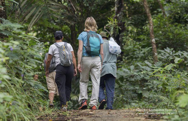 Trekking in Mbeliling, Flores island