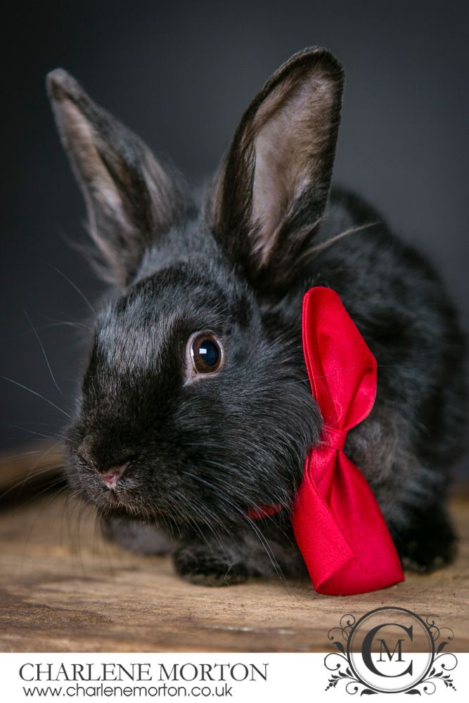 Pet rabbit photography