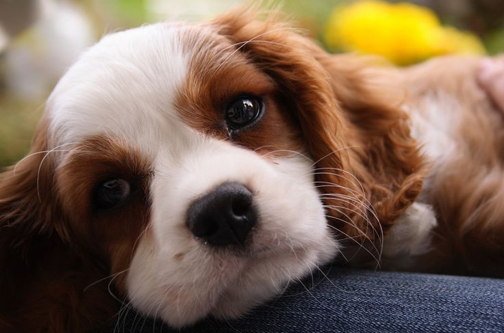 puppy images | Senate Passes Ban on Puppy Mills
