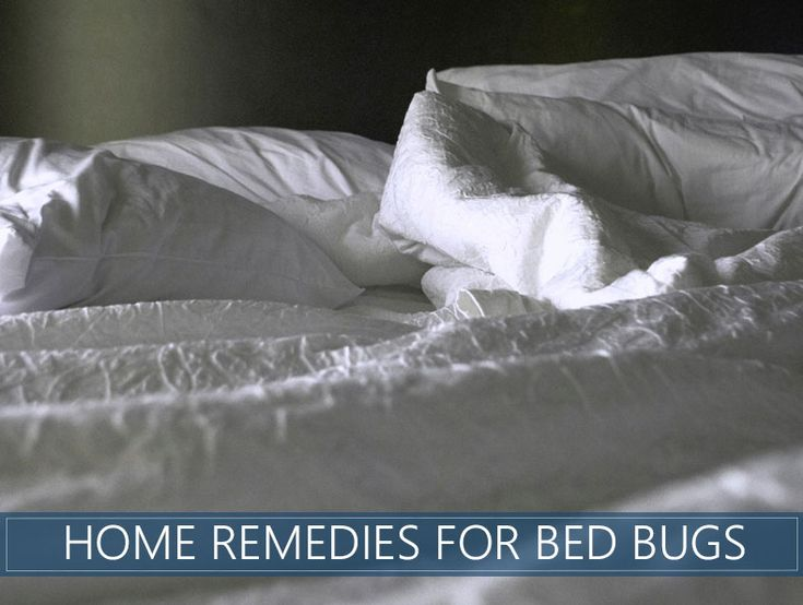 25 bed bug natural home remedies and diy treatment best