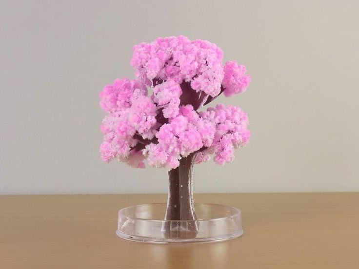 591723c34222b6d1620e609fefcbe781  cherry blossom tree blossom trees