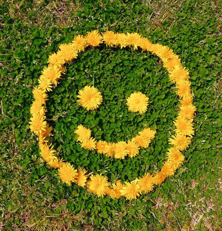 dandelion smile