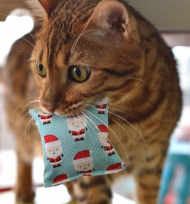 DIY catnip pillow  - easy toys for cats // Macskamentával töltött párnácskák - játékok cicáknak // Mindy - craft tutorial collection // #crafts #DIY #craftTutorial #tutorial #CraftsForPets