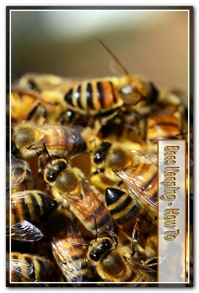 Pin by Bee Keeping DIY on Bee Keeping DIY How to Build