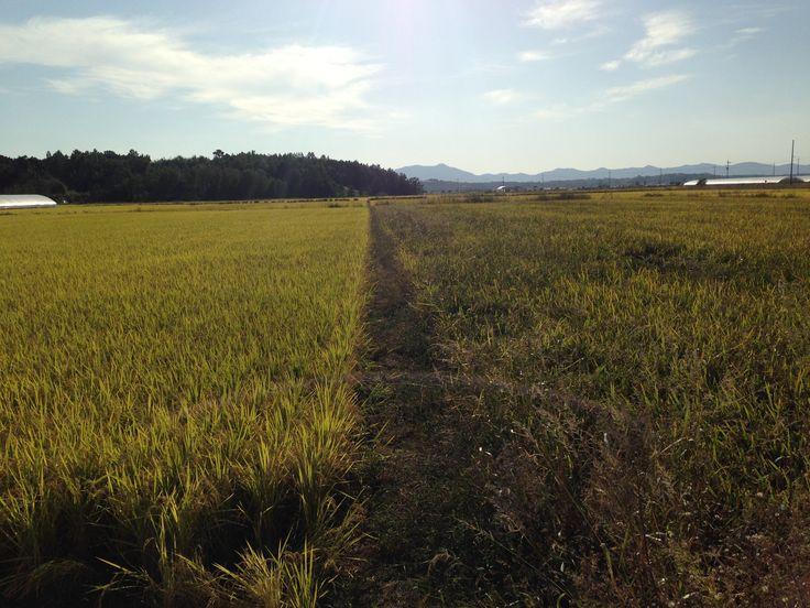 오도미 | 농심(農心)….부지런한 농부와 게으른 농부….