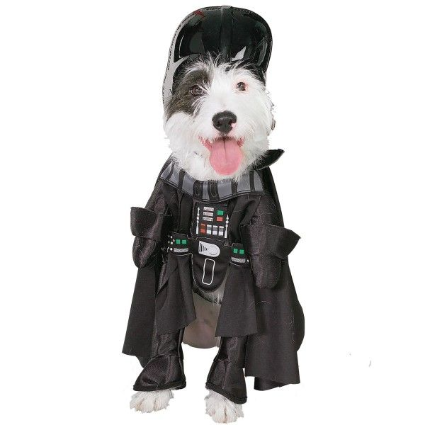 dog halloween costumes batman - Dogs With Halloween Costumes On