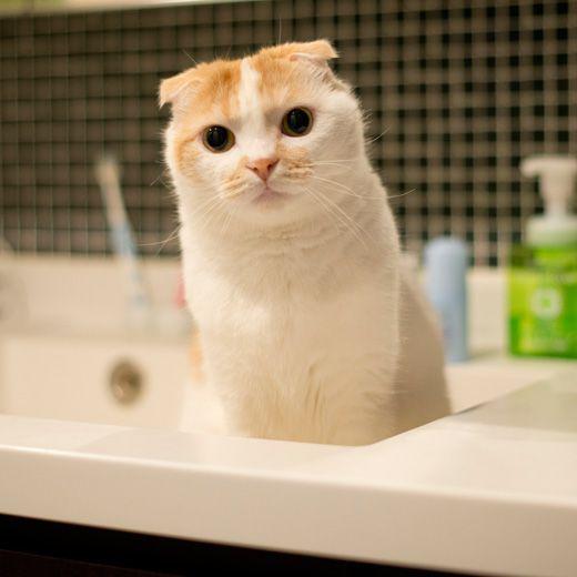 水出してくれます?