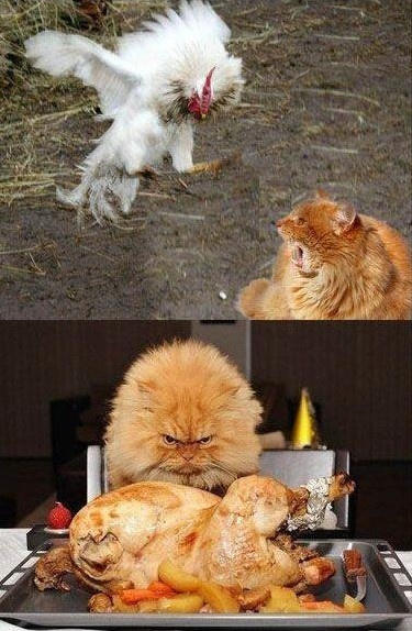 This is why you DON'T piss off a cat