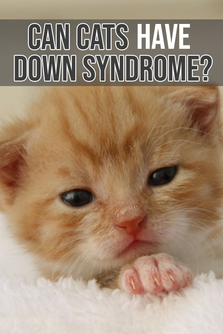 Learn can cats have down syndrome and similar developmental