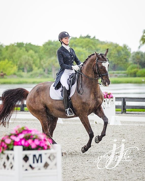Shannon Dueck And Allegro Ii In A Perfect Canter Pirouette Beautiful Horses Canter Animals