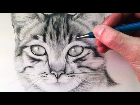 How To Draw a Realistic Cat with Pencil Step by Step : Drawing the Easy Way - YouTube