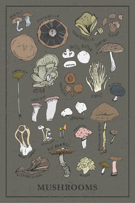 Hey, I found this really awesome Etsy listing at https://www.etsy.com/listing/247805837/mushroom-kitchen-print-types-12x18