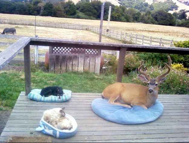 A deer who decided to come for a visit. | 41 Pictures You Need To See Before The Universe Ends THIS KILLS ME AHAHAHA