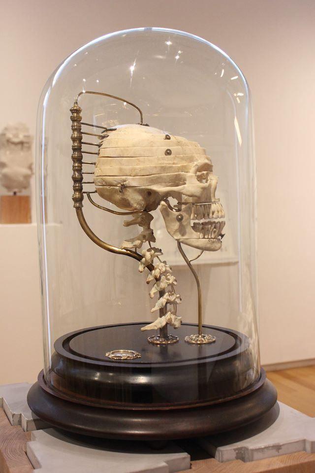 "Artist Ryan Matthew Cohn has resurrected the 18th century art of displaying ""exploded"" human skulls pioneered by French anatomist Claude Beauchene. (via Make)"