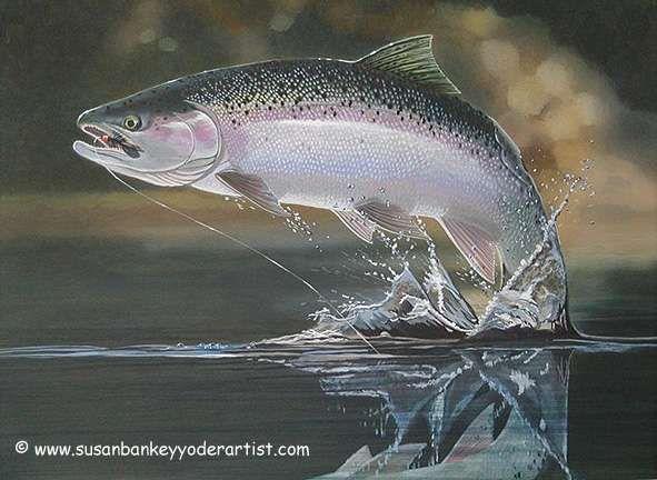 47 best images about steelhead on pinterest spotlight for What is steelhead fish