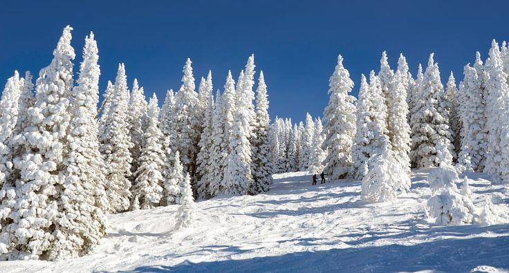 Ski the trees by Darius  Peckus on 500px