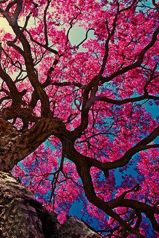 29 best images about fondos de pantalla on pinterest for Imagenes wallpaper hd para celular
