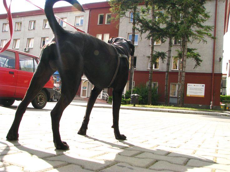Projekt wybiegów już w Urzędzie Miasta Tarnowa #tarnow
