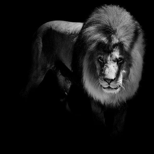 Best Black White Images On Pinterest Amazing Photography - Powerful and intimate black white animal portraits by luke holas