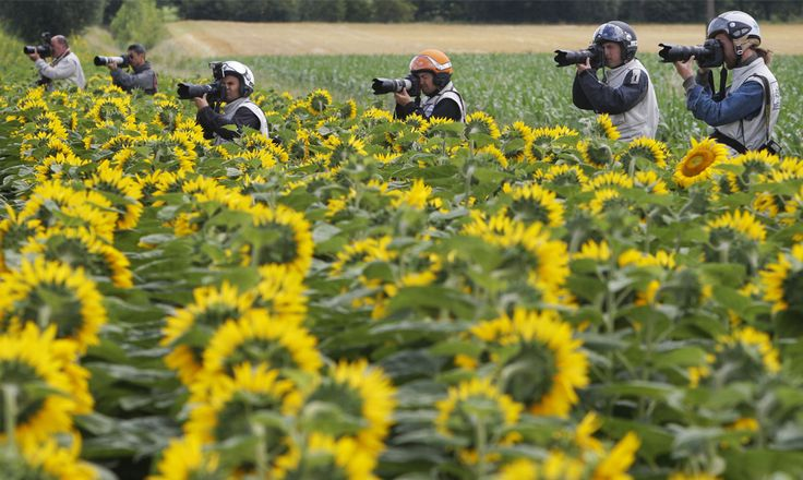 Getting that perfect sunflower photo! Tour de France 2008. Stage 9. Toulouse to Bagneres-de-Bigorre. Source: AP Photo/Christophe Ena via http://www.boston.com/bigpicture/2008/07/2008_tour_de_france.html #TdF #sunflowers #tournesol