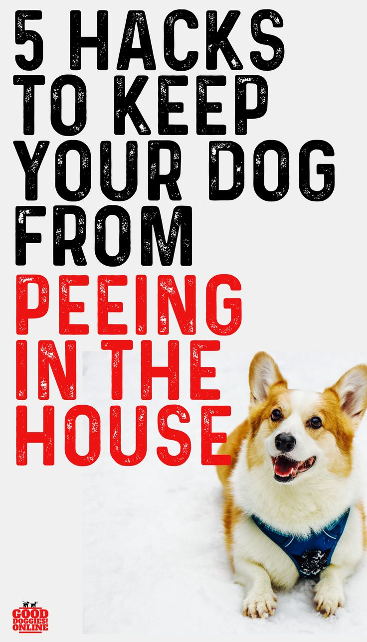 how to stop small dog from peeing when excited