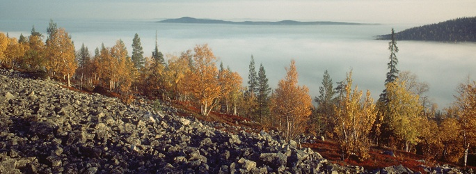 Pyhä-Luosto National Park. Photo: Tapani Vartiainen