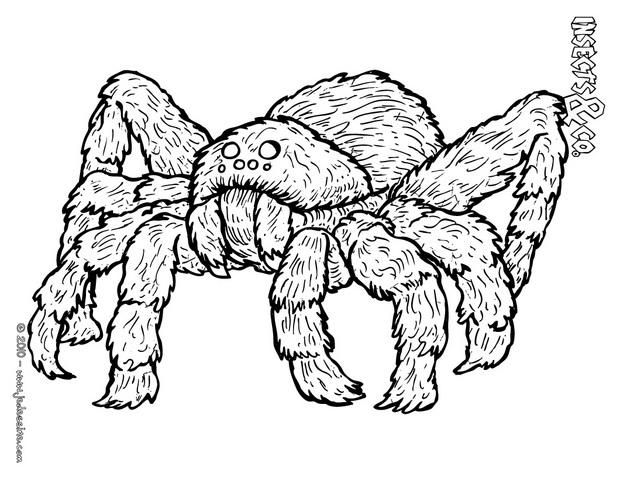 84 best coloriages animaux sauvages images on pinterest children coloring pages coloring book - Dessin d une araignee ...