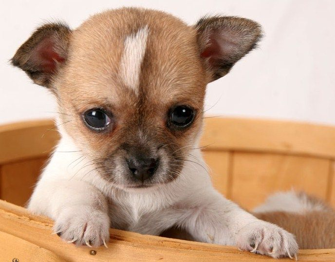 Cute Small Dogs That Dont Shed