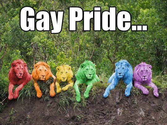 Gay Pride Lions